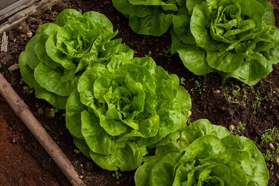 Jardineria/Agricultura